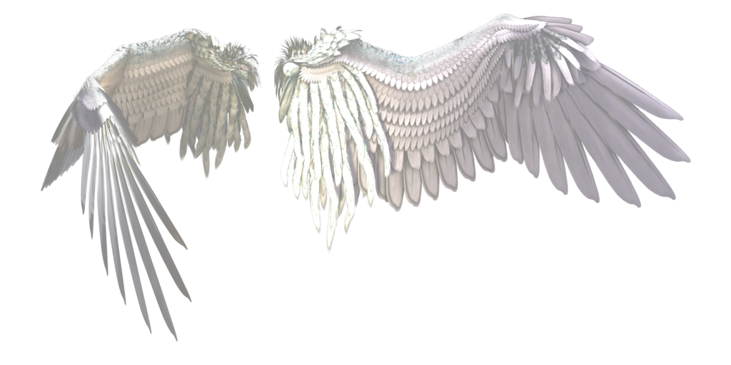 White wing png. Wings by gatterwe on