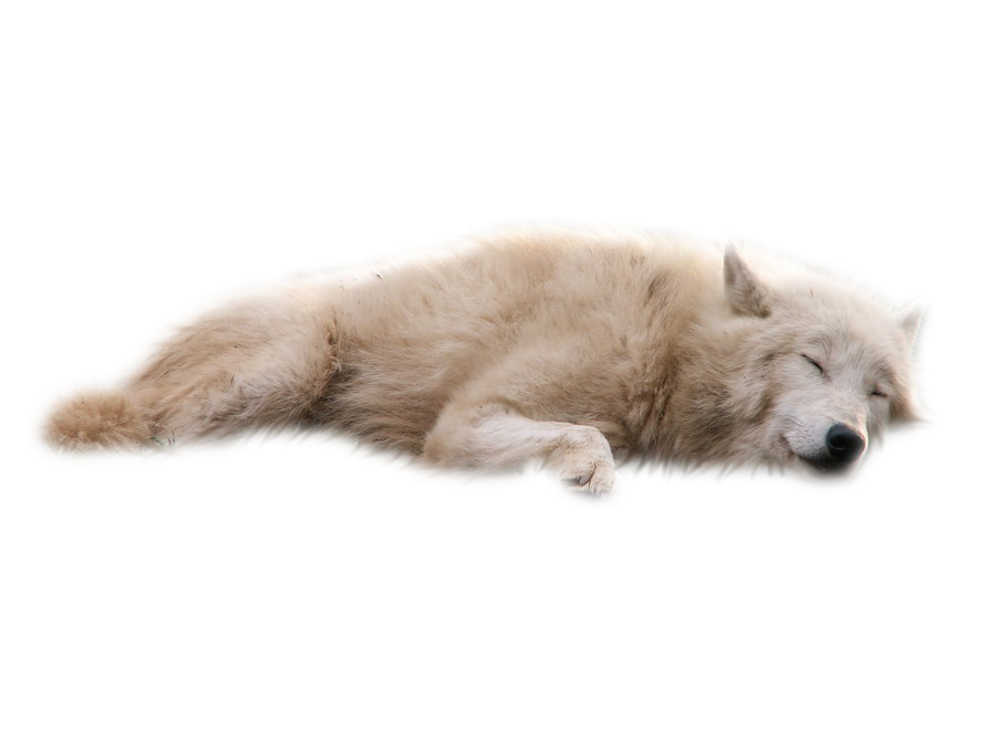 White wolf png. By raynexstorm on deviantart