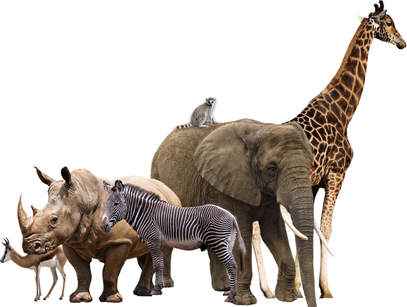 Wild animal png. Animals transparent images pluspng