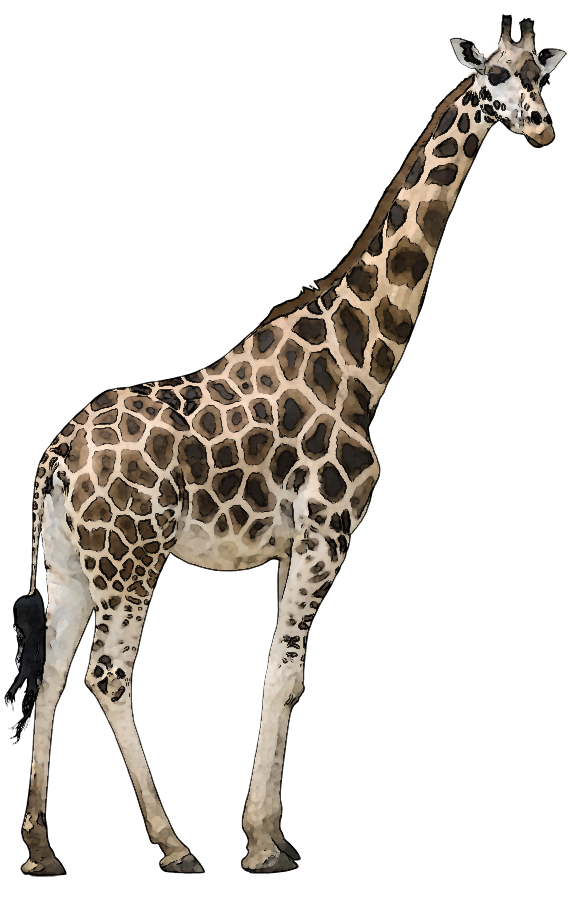 Wild animals png. Hd images of transparent