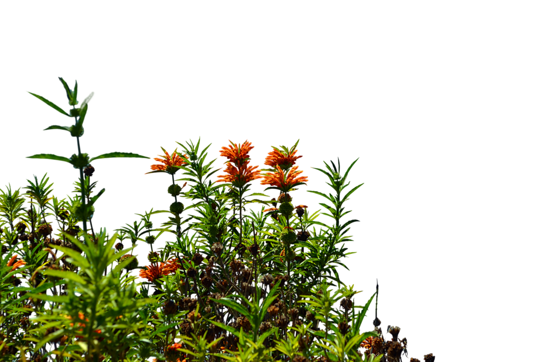 Wild flowers png. Stock photo by annamae