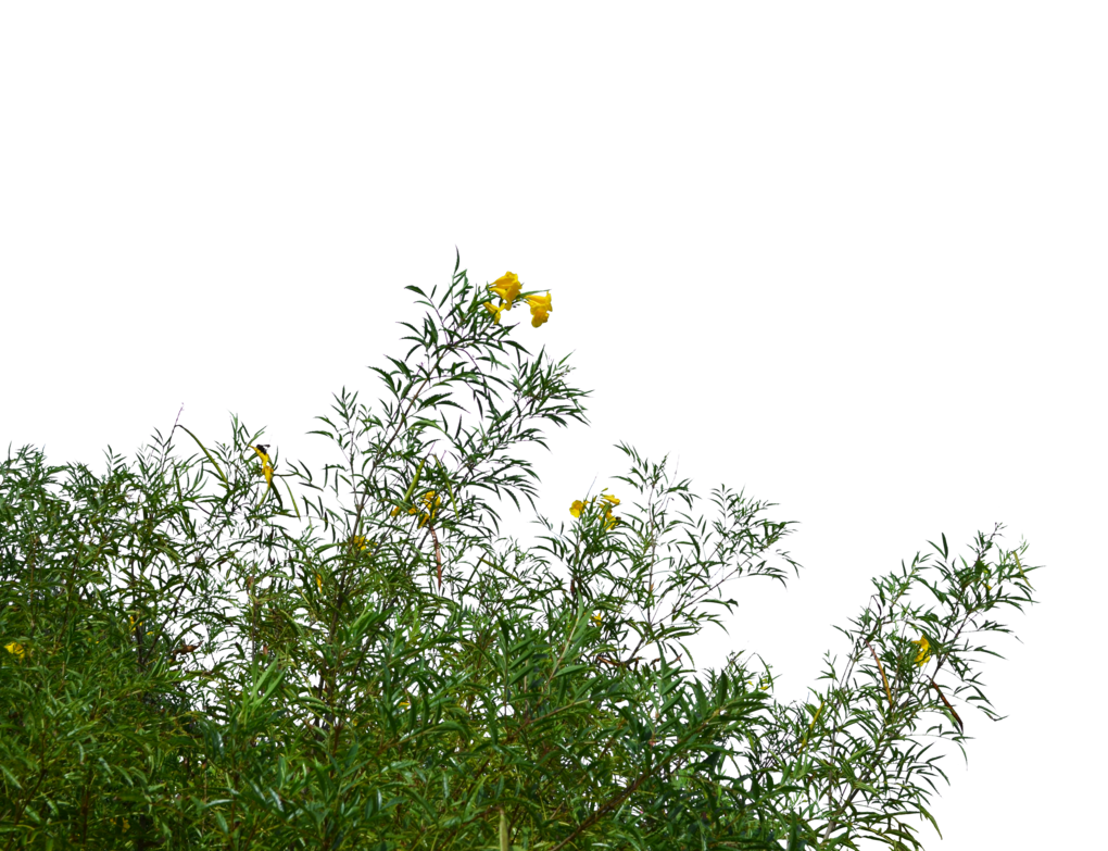 Wild flowers png. And grass stock photo