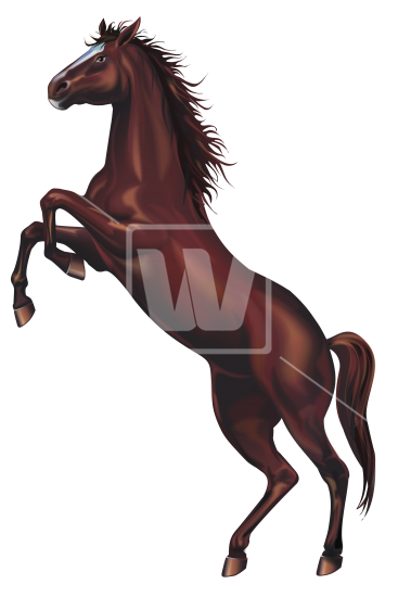Download high resolution image. Wild horse png banner transparent stock