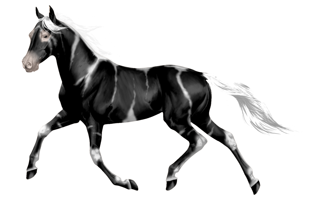 Wild horse png. Design for me by