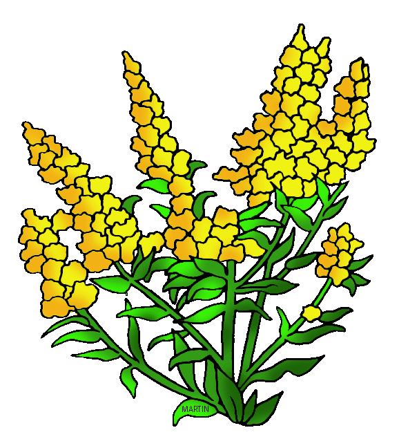 Wildflower clipart. United states clip art