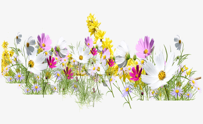 A bunch of wildflowers. Wildflower clipart picture black and white