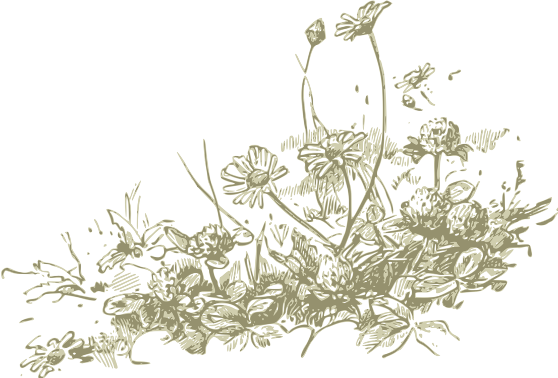 Drawing detail plant. Wildflower line art computer