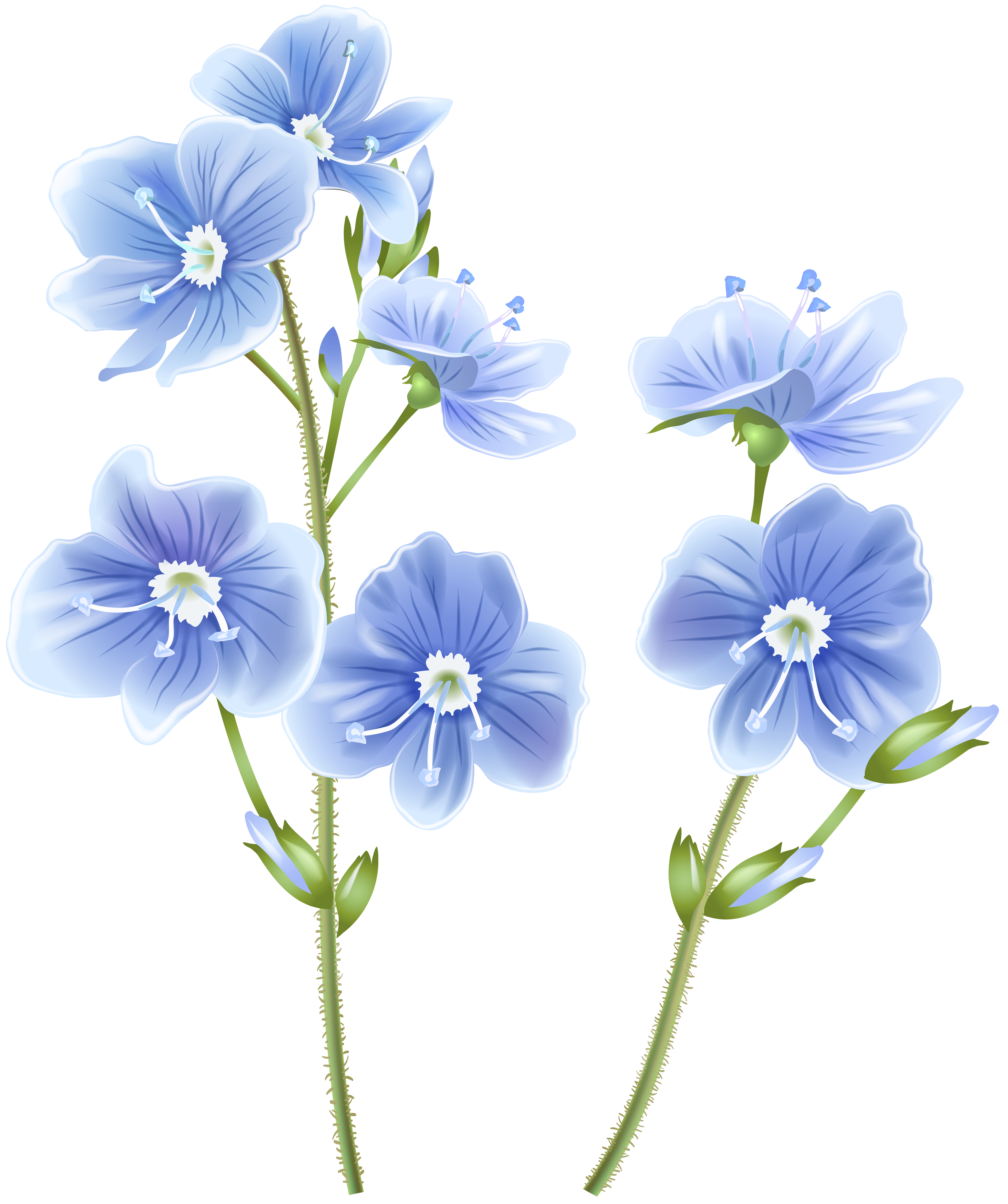 Blue png clip art. Wildflower clipart black and white library