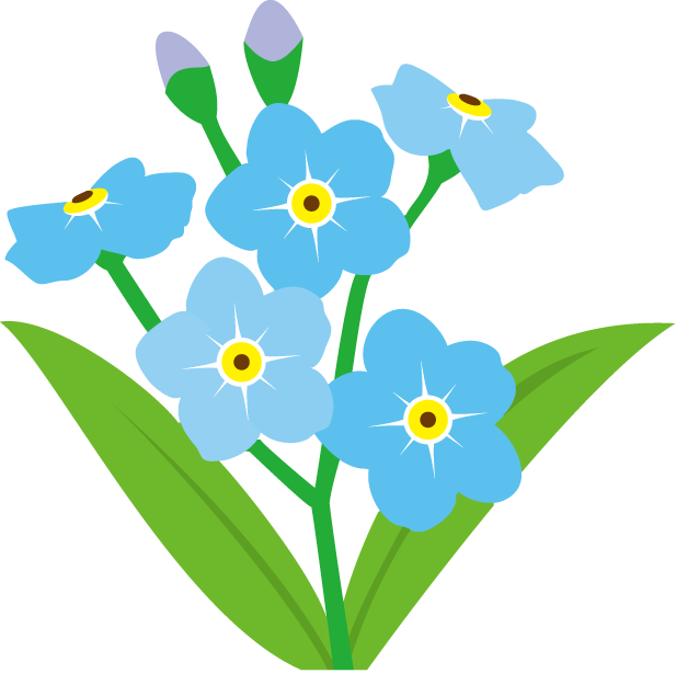 Transparent grave flower clipart. Forget me not png
