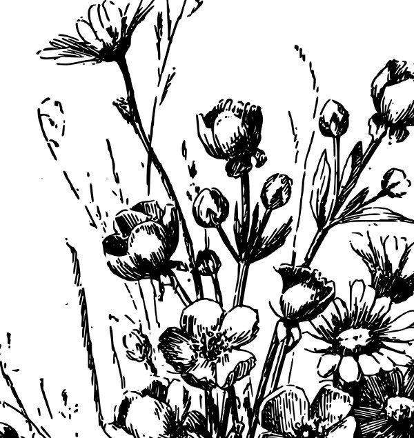No credit required wildflowers. Wildflower clipart vintage wildflower vector library download
