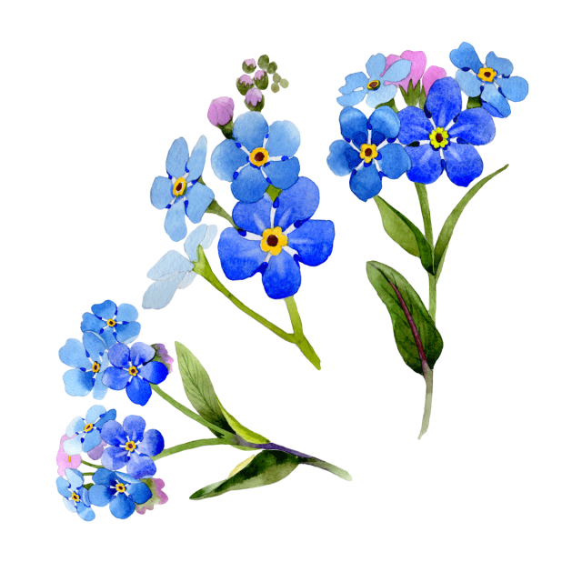 Wildflower vector watercolor. Flowers background flower frame