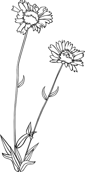 Wildflower vector. Wild flower clip art