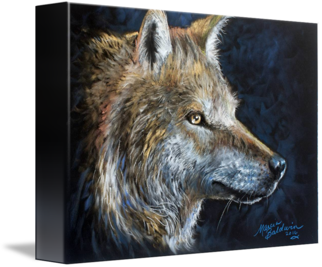 Wildlife drawing oil pastel. The wolf in by