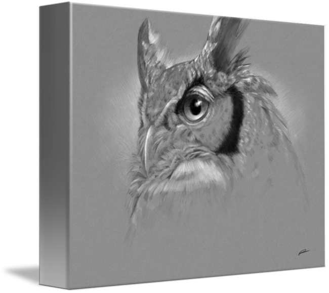 Wildlife drawing owl. Drawings portrait by norman