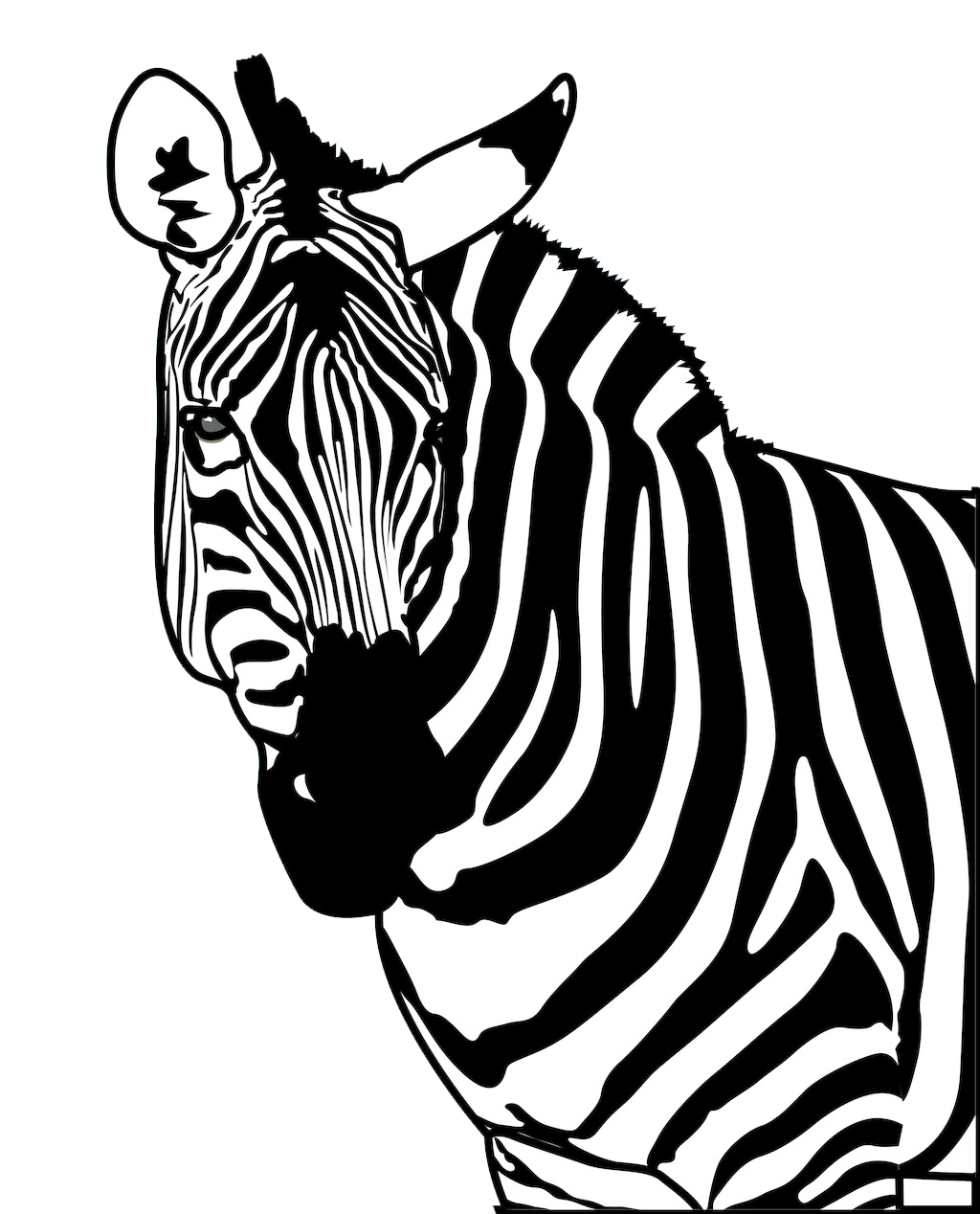 Wildlife drawing poster. Zebra clip art strong