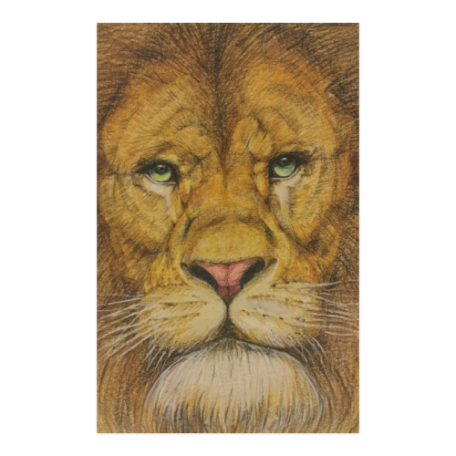 Wildlife drawing poster. Regal lion id d