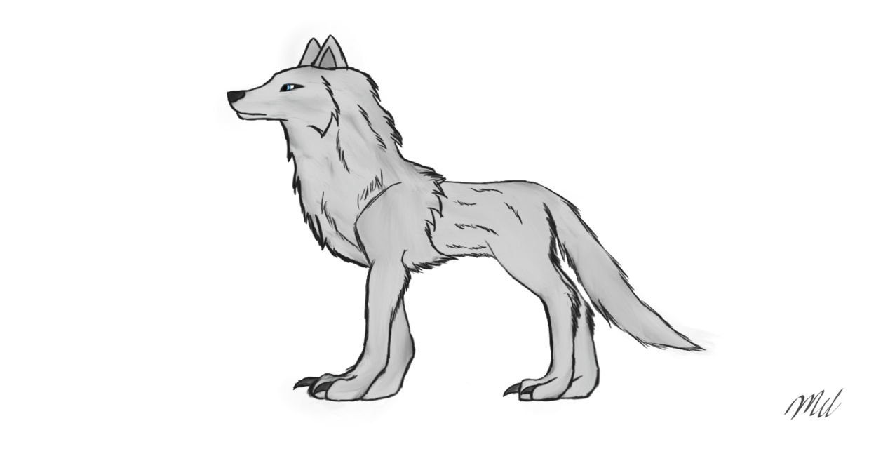 Wildlife drawing wolf. Winter the loth by