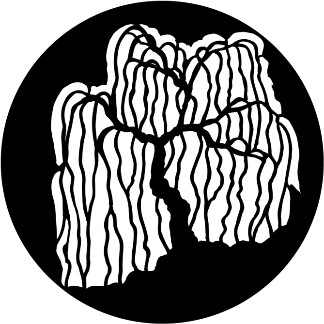 Willow drawing weeping. Download hd apollo trees