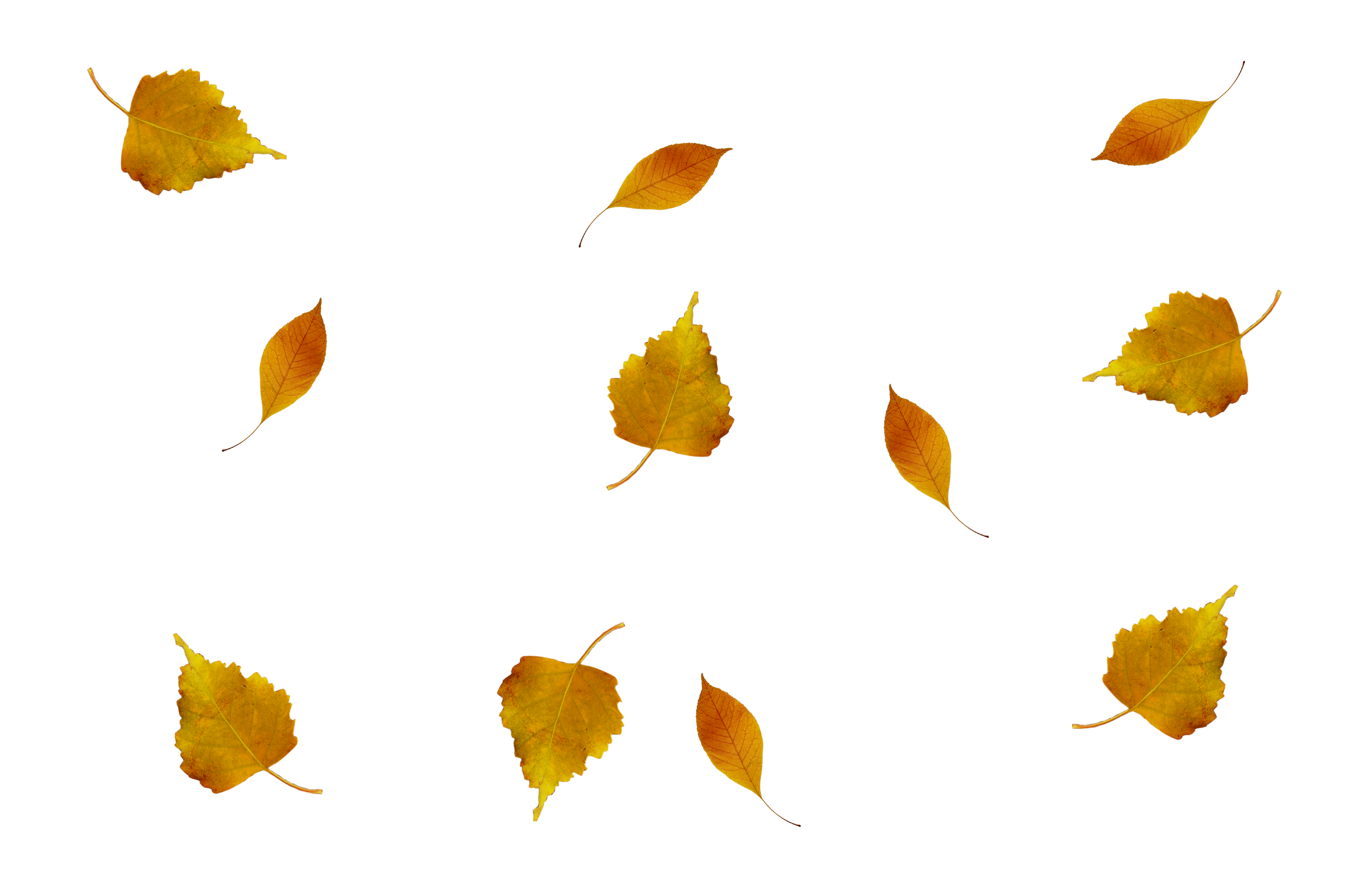 Wind and leaves png. Hojas de otono by