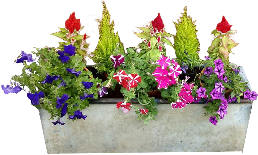 potted flowers png