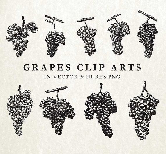 Wine clipart rustic wine. Grape vine