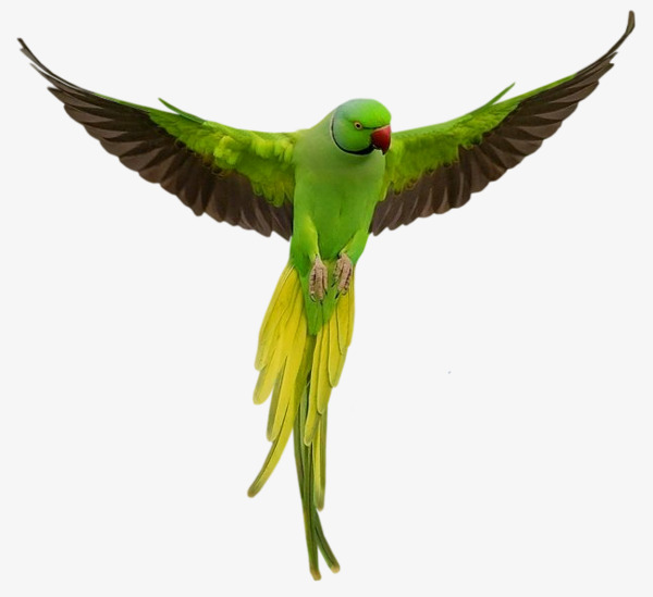 Wing clipart bird wing. Green parrot wings open
