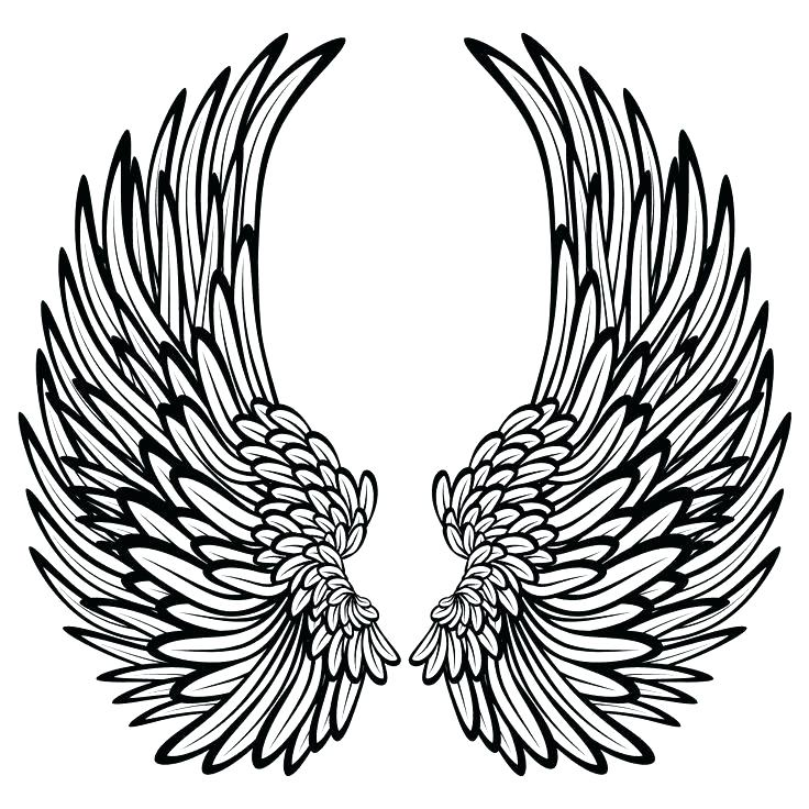 wing clipart colored wing