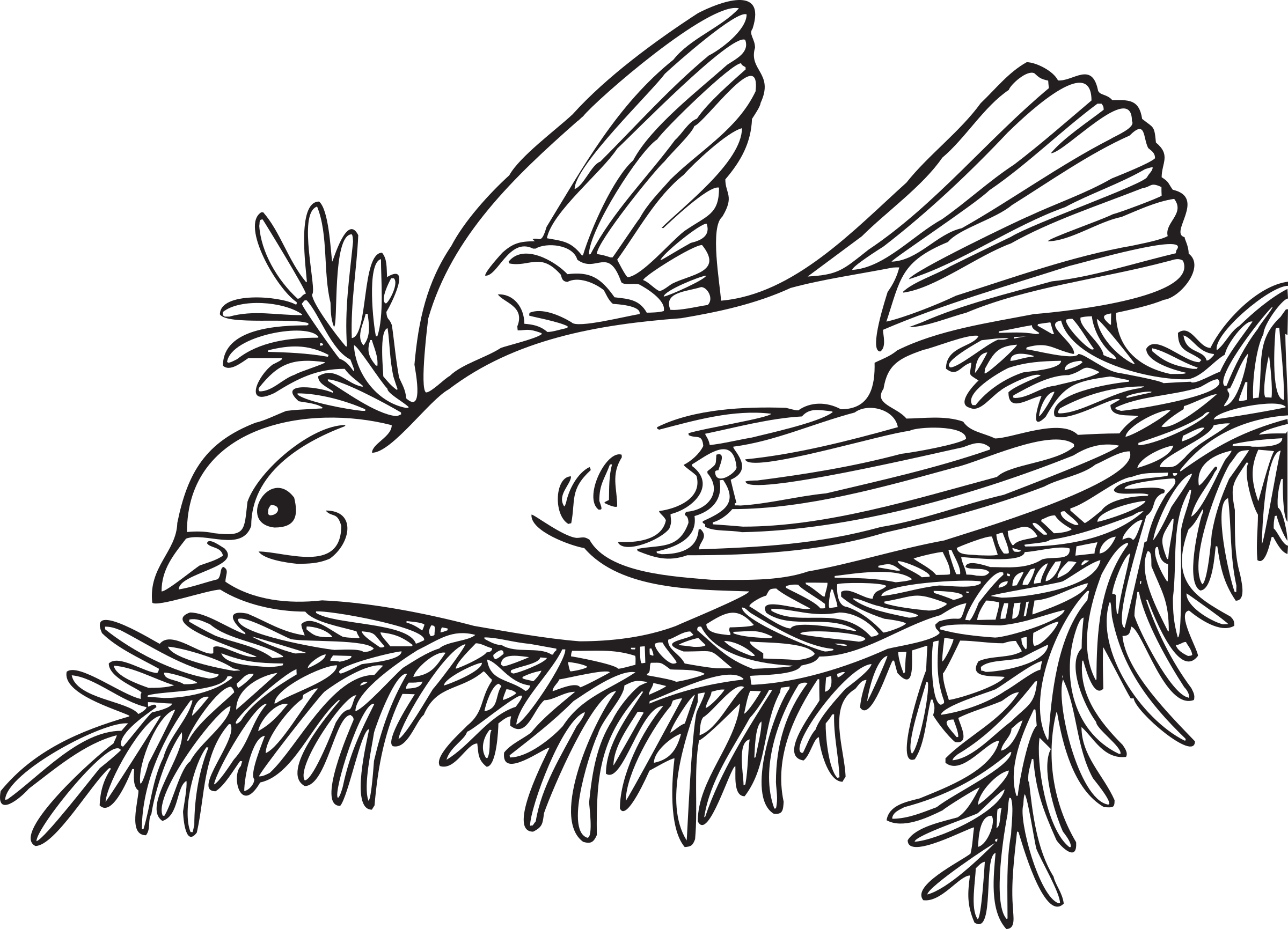 Wing svg coloring page. Book willow goldfinch icons