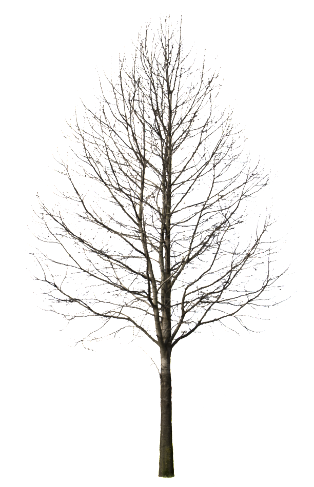 Winter trees png. Deciduous tree i cutout