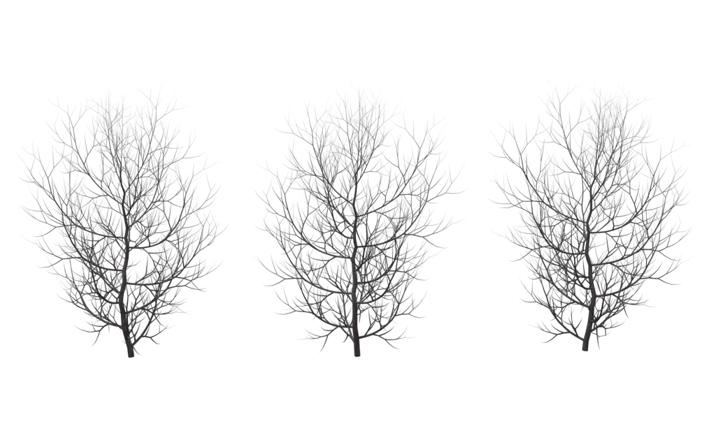 Winter trees png. By wolverine on deviantart