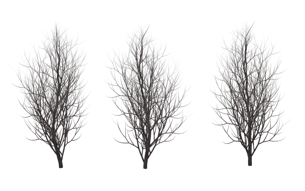 Winter tree silhouette png. Trees by wolverine on