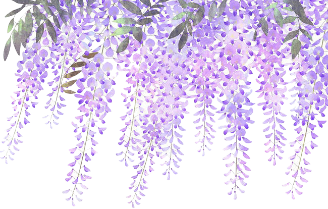Wisteria flower png. Lavender purple painted flowers