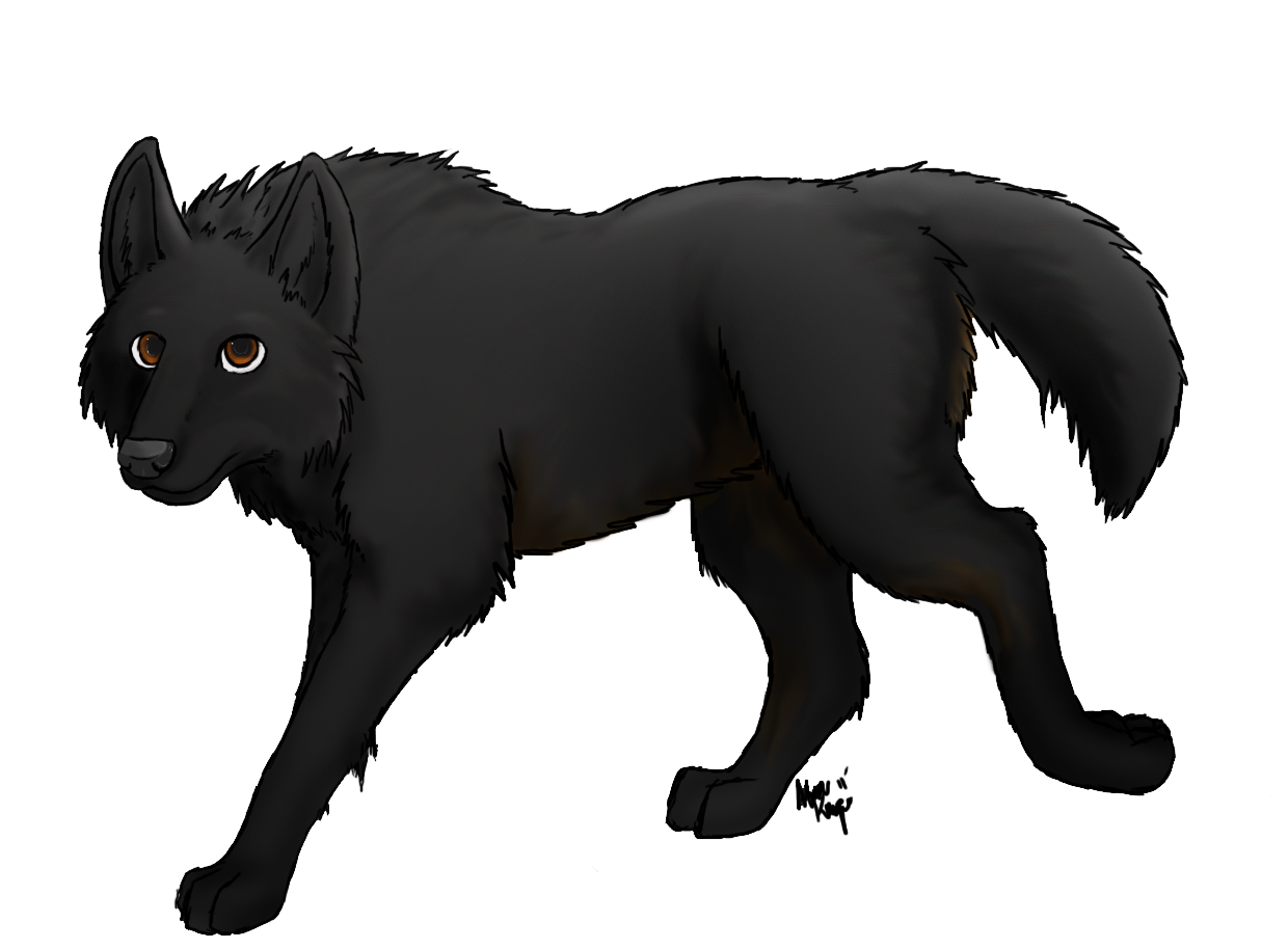 Wolves transparent digital art. Image wolf practice by