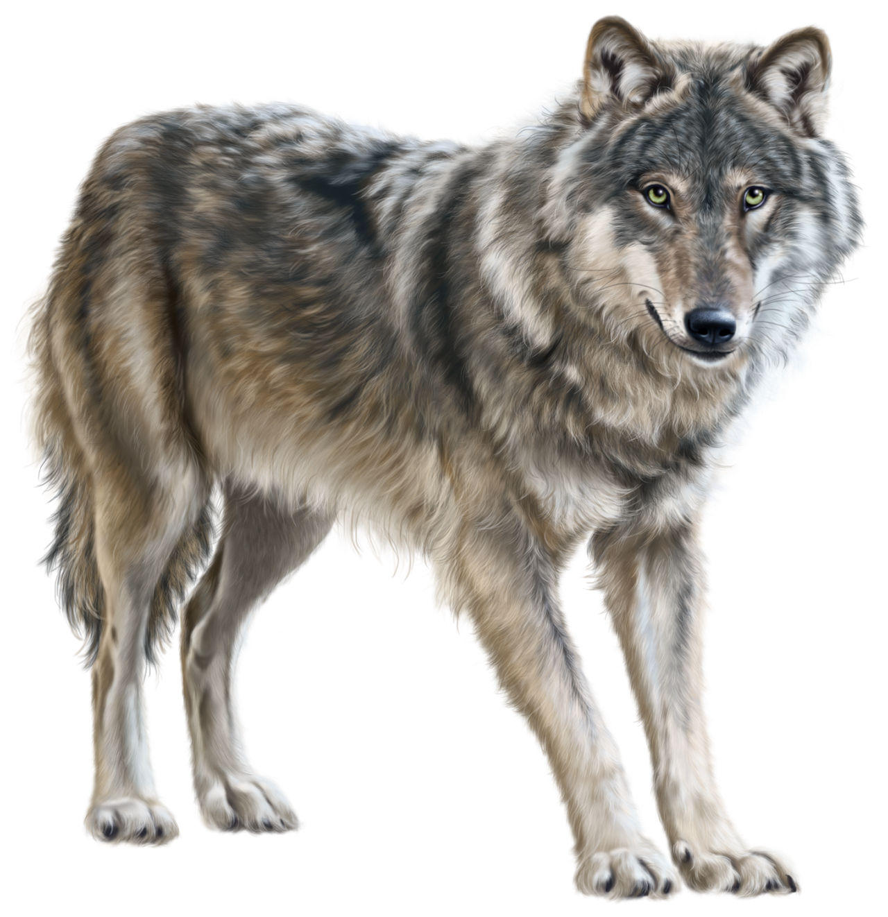 wolf png transparent