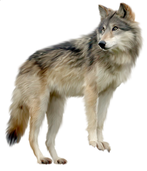 wolves transparent spirit
