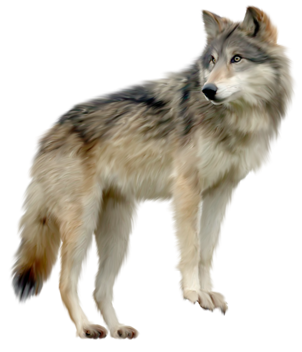 Wolf clipart female wolf. Png image picture download