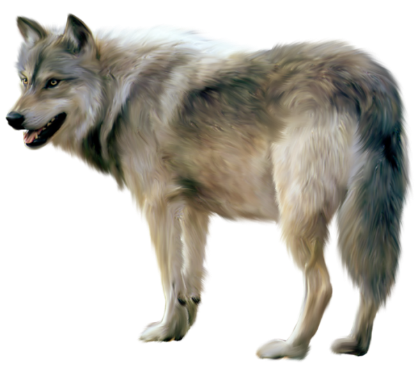 Wolf png images. Painted clipart gallery yopriceville