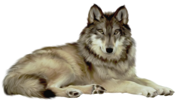 Wolf transparent png. Clipart gallery yopriceville high