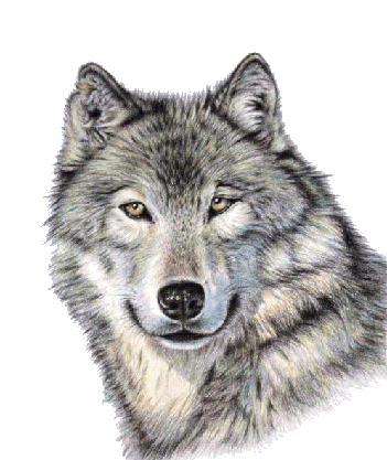 Wolf face png. Cute image purepng free