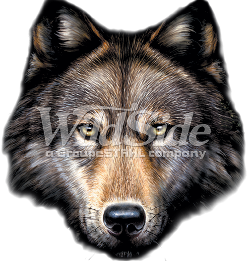 Wolf head png. The wild side