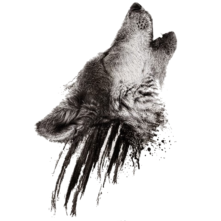Wolf head png. Image realistic howling on