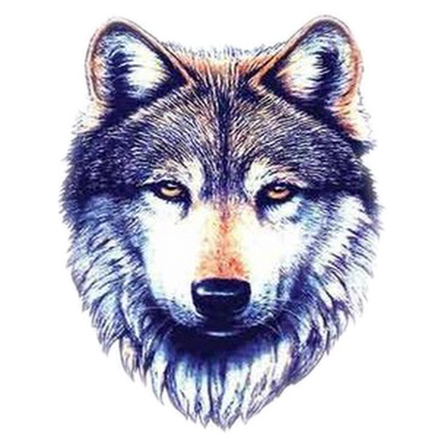 Wolf head png. Photo