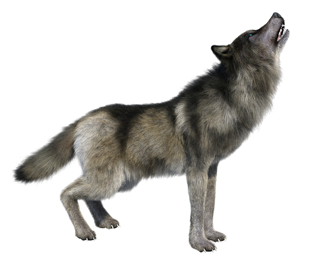 Howling wolf png. Imges free downloa images