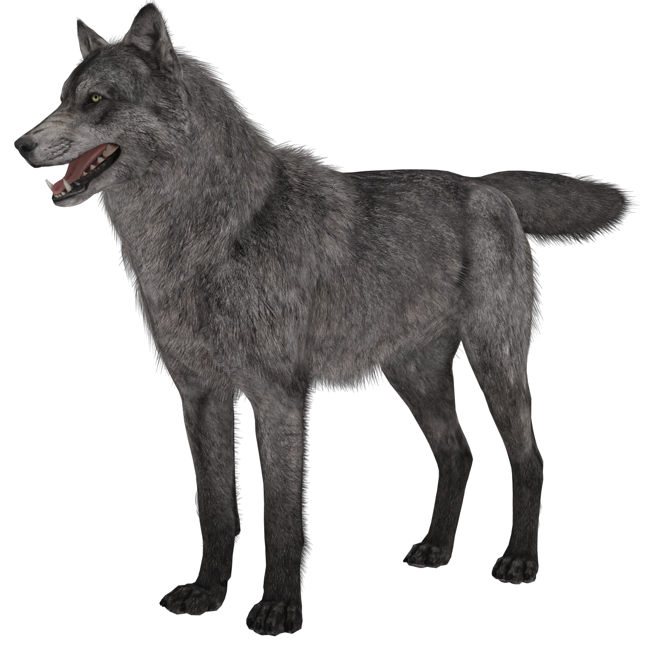 Wolves transparent ghost. Wolf png picture gallery