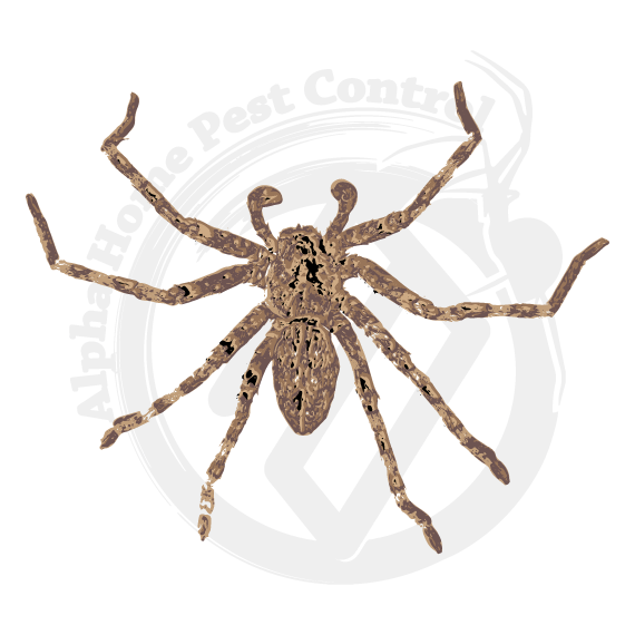 Wolf spider png. Alpha home pest control