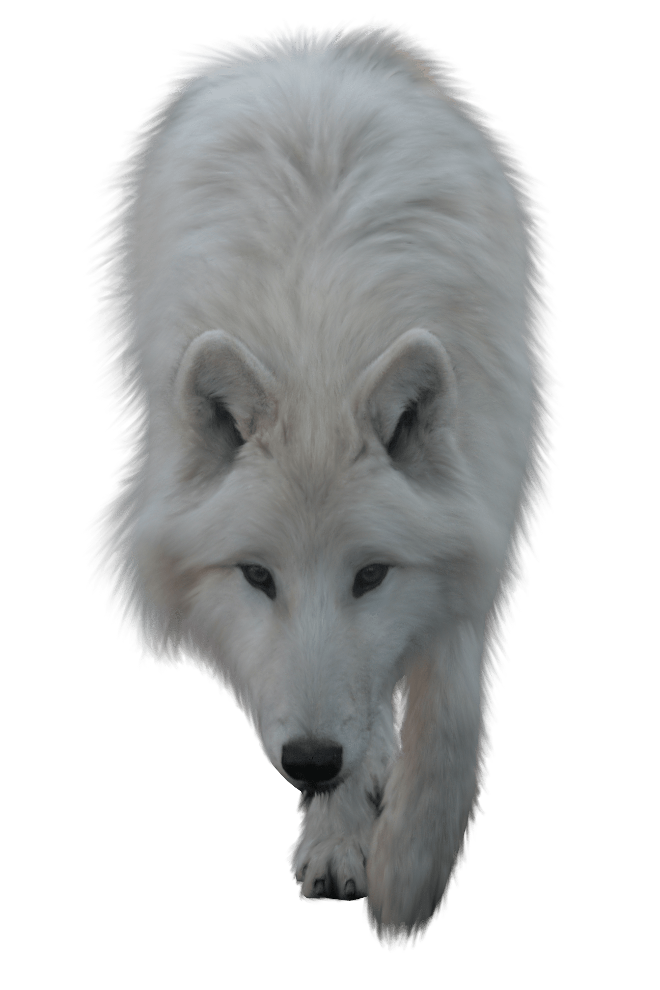 Wolf transparent png. White stickpng animals wolves