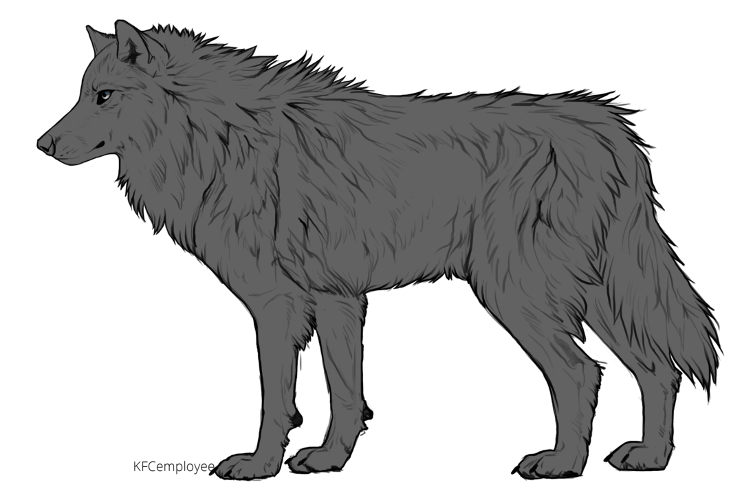 Wolfs drawing. Free fluffy wolf side