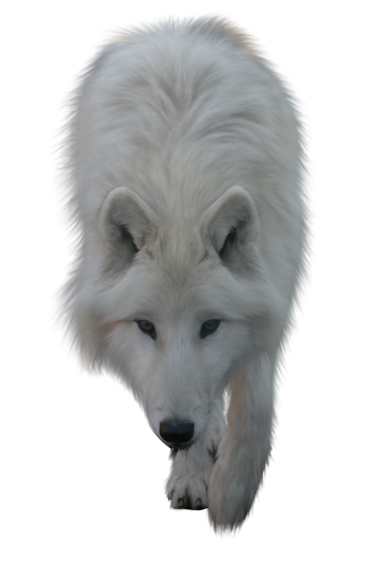 Wolves transparent snow. Wolf png clipart web
