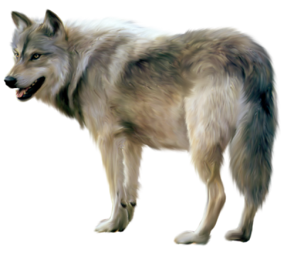 Wolves transparent. Gallery isolated stock photos