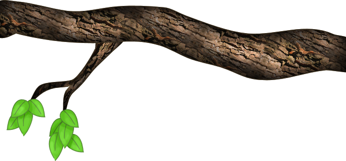 Wood branch png. Collection of tree